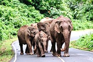 thailande-en-famille - le-centre-de-la-thailande - khao-yai-parc-naturel-en-thailande/
