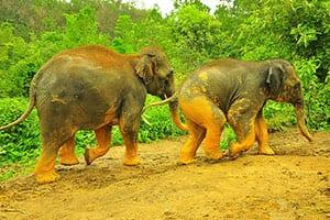Chiang Mai en famille - activité - éléphant - promenade