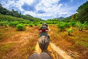 Thaïlande en famille-khaosok-elephant-trek thailande avec enfant
