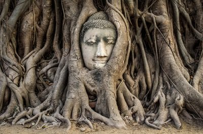 bouddha - ayuthaya- racines -thailande- voyage -
