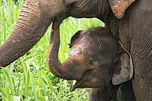 sukhothai avec des enfants -que faire à sukhothai - reserve éléphant thailande