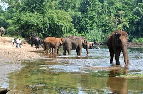 Kanchanaburi avec des enfants - activité - éléphant - trek
