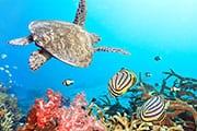 tortue - plongée thailande -poisson multicolore - corail -