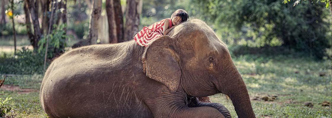 thailande-elephant-enfant-rencontre-caresser-jungle-voyage-mignon-drole-mammifère-tradition