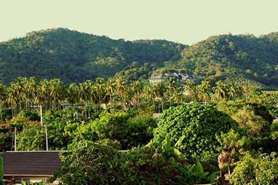 paysage-jungle-phuket