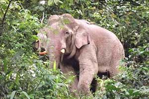 Que faire à khao yai avec des ados - thailande avec des enfants - voir des elephant thailande